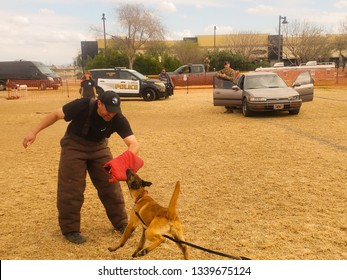 El Mirage, Arizona / USA - February 2, 2019: K9 Police Puppy, Belgian Malinois, detaining a suspect by biting their hand during an exhibition at the Safety Awareness Day in El Mirage Arizona