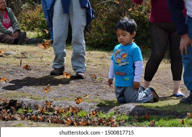 El Rosario, Michoacan, Mexico, January 14, 2015: A little boy observes Monarch Butterflies in flight and on the ground at El Rosario Monarch Butterfly Preserve, Michoacan, Mexico.