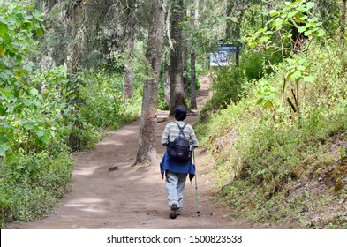 El Rosario, Michoacan, Mexico, January 14, 2015: A woman hikes on the butterfly trail at El Rosario Monarch Butterfly Preserve, Michoacan, Mexico
