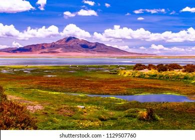 El Salar de Tara or Tara Salt Flat is located in the High Plateau, at an altitude of more than 4000 meters in Atacama desert, Chile