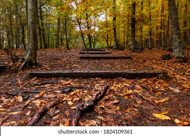 El Tiemblo chestnut natural reserve, in Avila, Castilla y Leon. Autumn with fallen leaves