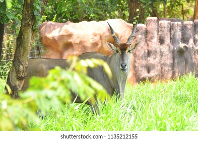 Elan on green grass