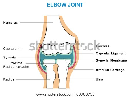 Elbow Capsular Joint Diagram Library Of Wiring Diagram