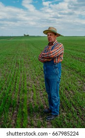 The elder farmer stands in his field and looks at how his wheat grows