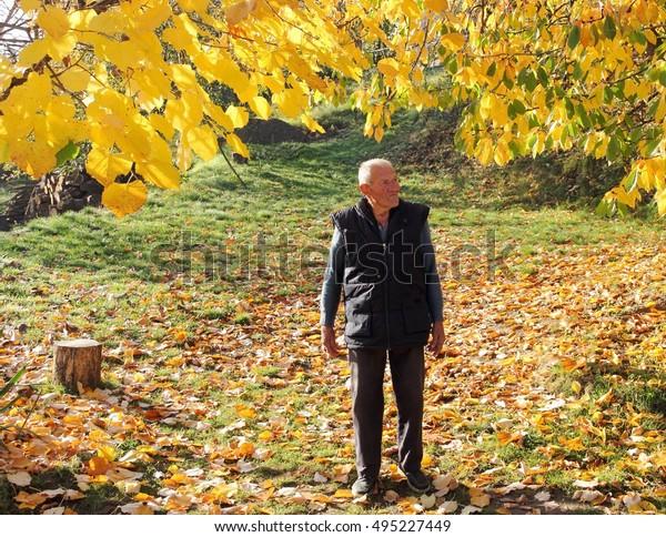 Elder Man Under Linden Tree His Stock Photo Edit Now 495227449