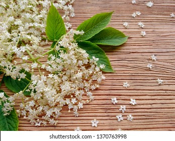 Elderberry branch white flowers & leaf on rustic wooden background. Clusters flower elderberry from garden (Sambucus nigra). Known as elderberry, elder flower, black elder, European elder. Elderflower