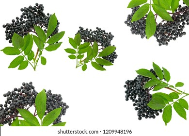Elderberry collage. elderberry ( Sambucus ) closeup isolated on white background.Fresh fruit black elderberry. Harvest, food.