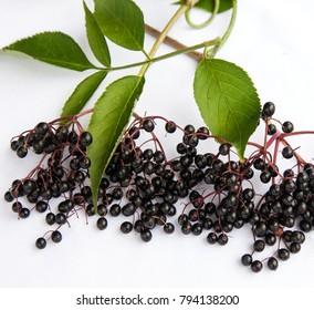 Elderberry on the white background