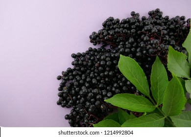 Elderberry. elderberry ( Sambucus ).Elderberry berries bunch on a light lilac background.Fresh fruit black elderberry.