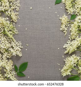 Elderflower blossom flowers on gray linen tablecloth background. Copy space. Top view.