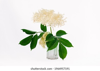 Elderflower cordial plant in a green vase isolated on white	 - Shutterstock ID 1964957191