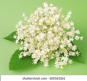 ELDERFLOWER WITH LEAVES ON GREEN