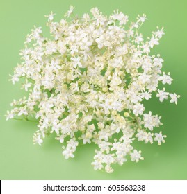 ELDERFLOWER ON GREEN