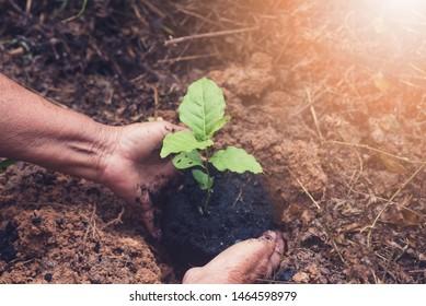5 X Morning Glory Seeds Thai Vegetable Seed Organic Plant Asian Garden