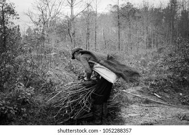 An elderly Chinese man picking up branches (Yuanyang, Yunnan, China)