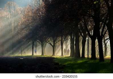 An elderly couple walking through a sun ray lit park path with a woman running before them. The path is surrounded  by a beautiful avenue of trees.