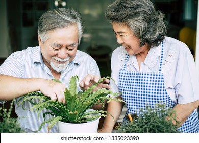 Elderly couples talking together and plant a trees in pots.