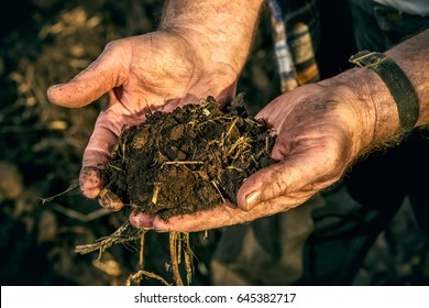 An elderly farmer holds a handful of fertile black soil in his hands. Agriculture, crop concept.