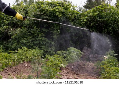 Elderly farmer man in hat, glasses and protective clothing sprinkles potatoes with professional sprayer. Struggle with the Colorado beetle. Blue tank with electric sprayer. Strong poison for insects.