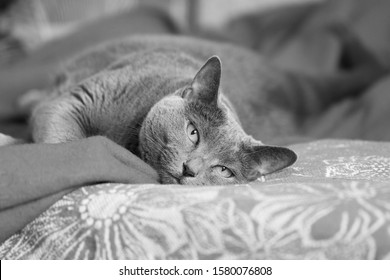 elderly-gray-cat-lazily-stretched-260nw-