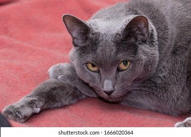 elderly-gray-cat-resting-his-260nw-16660