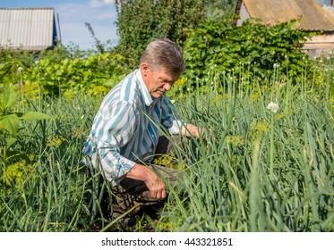 an elderly man in a garden Flight grass