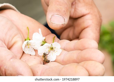 an elderly man holding a bee