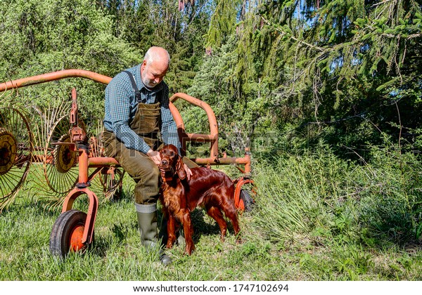 An elderly man sits on an old star wheel rake at the edge of the forest and lovingly fondles his beautiful Irish Setter hunting dog.