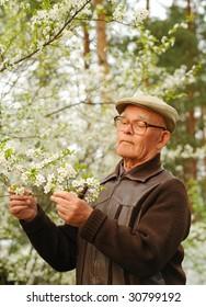 Elderly man working in a garden