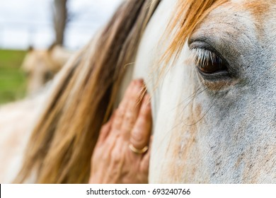 Elderly woman caressing the neck of a horse with her hand in close up focus on its eye with a gentle patient expression on an Equine Assisted Psychotherapy farm in NSW Australia