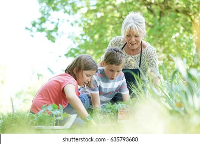 Elderly woman having fun gardening with grandkids