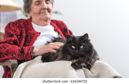 Elderly woman with her black cat