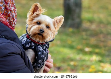 Elderly woman holding a little puppy in her arms