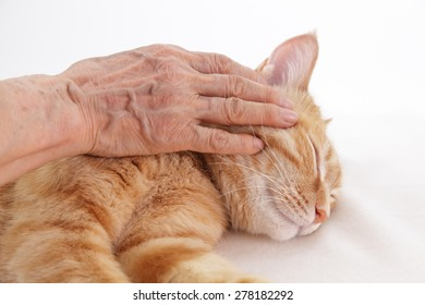 Elderly woman stroking a ginger cat