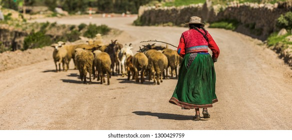 Elderly woman wearing colorful typical clothes and guiding a flock of sheep in the altitude of the Andes of Peru, South America