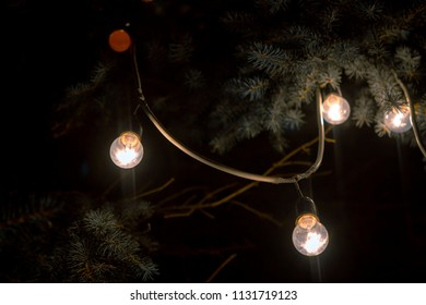 electric bulbs on branches street decoration