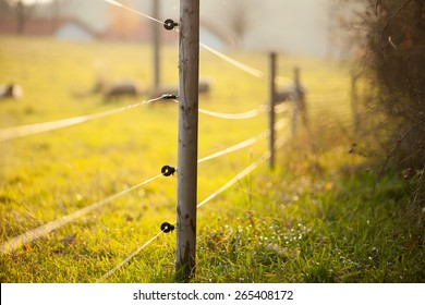 Electric fencing around lovely pasture with farm animals