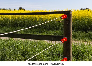 electric pasture fence at springtime sunny day in countryside of south germany beautiful landscape