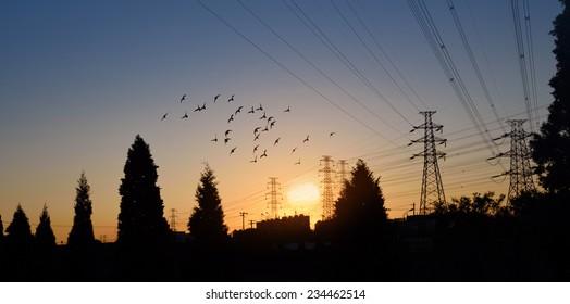 Electric Power pylon with flock birds at dawn.