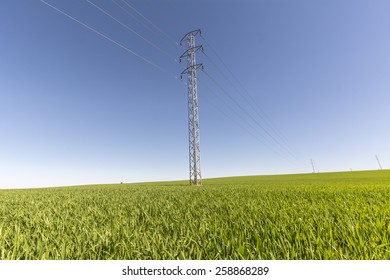 Electric tower in green field, wheat crop