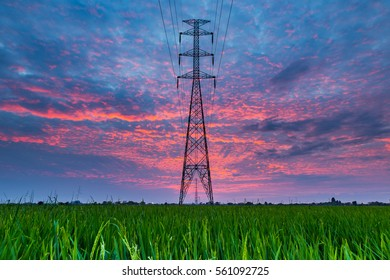 Electric transmission line in rice field during sunset