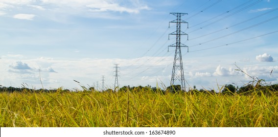 Electric transmission tower in the golden rice field.