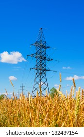 Electrical powerline behind wheat field against a background of clear sky in summer day