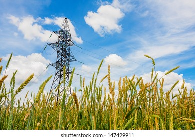 Electrical powerline behind wheat field against a background of the sky in summer day