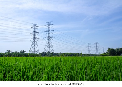 Electriccity Pole with green rice field