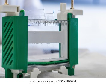Electrophoresis chamber or tank prepared with solution. Protein samples are loaded into numbered wells before subjected to separation based on molecular weight under an applied electrical field.