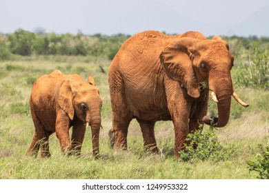 Elefant with baby in Tsavo East National Park