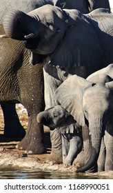 Elefant family in Etosha National Park, Namibia