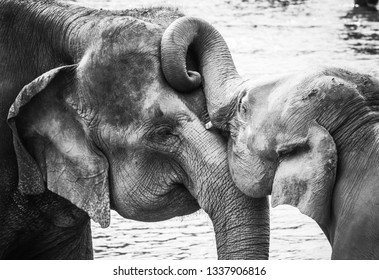 Elefant Love Black and White