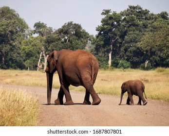Elefant mom and baby crossing the street Africa